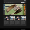 Премиум тема WordPress от ThemeForest: Sheets